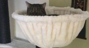 Katzenberatung - Wohnungshaltung