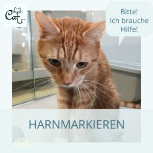 Verhaltensberatung Katzen Berlin Harnmarkieren Unsauberkeit