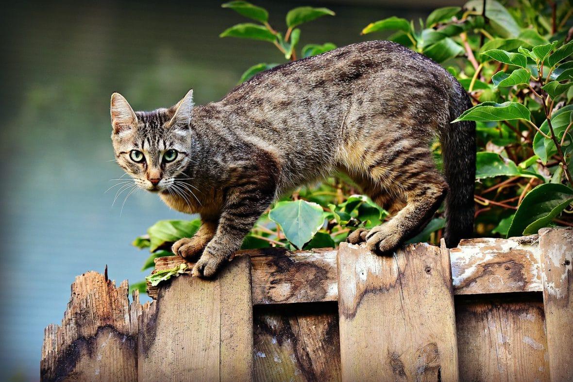 Katzenberatung Harnmarkieren Unsauberkeit