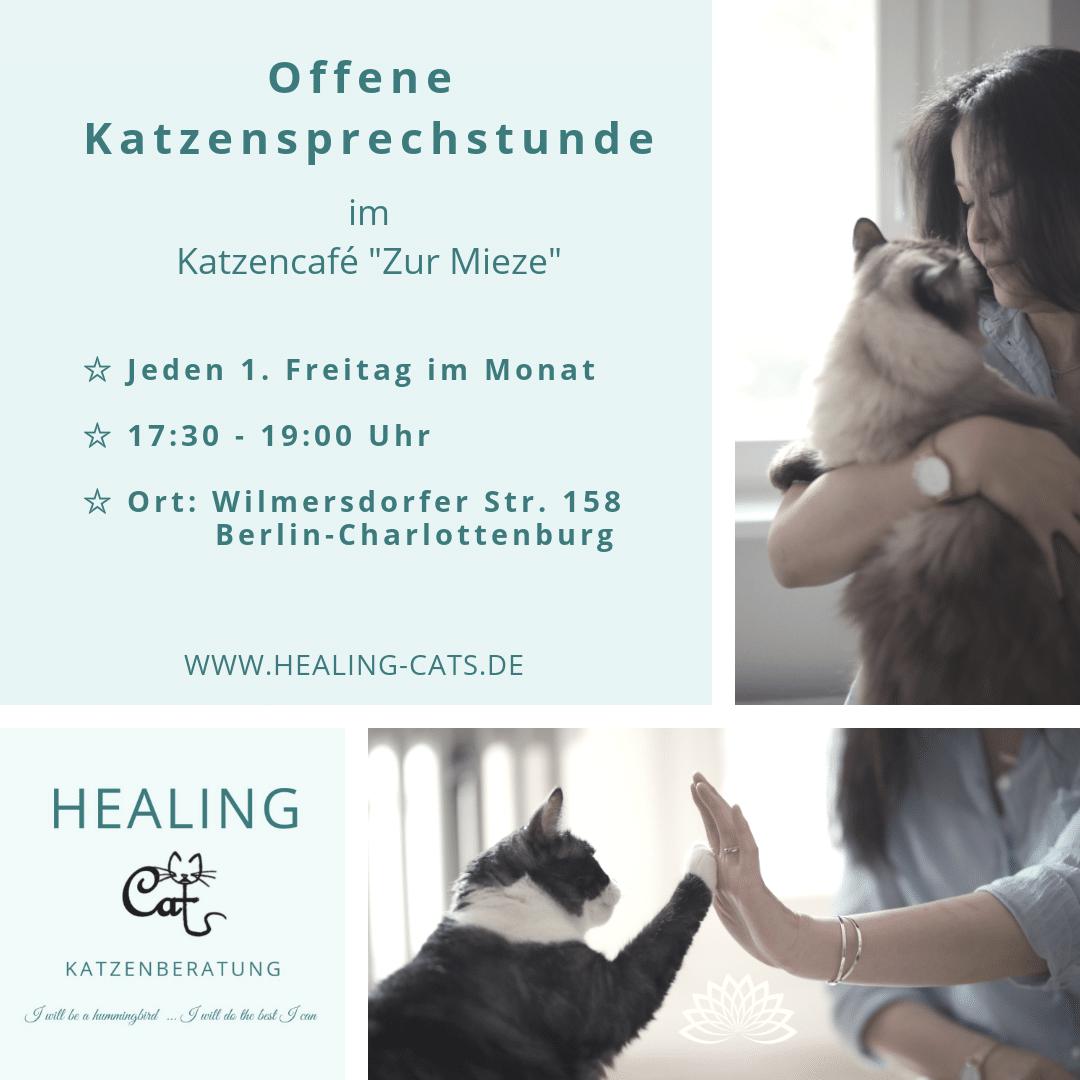 Katzenberatung Katzenberatung Katzenpsychologin Berlin