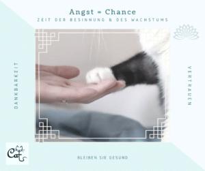 Healing Cats Katzenberatung Berlin