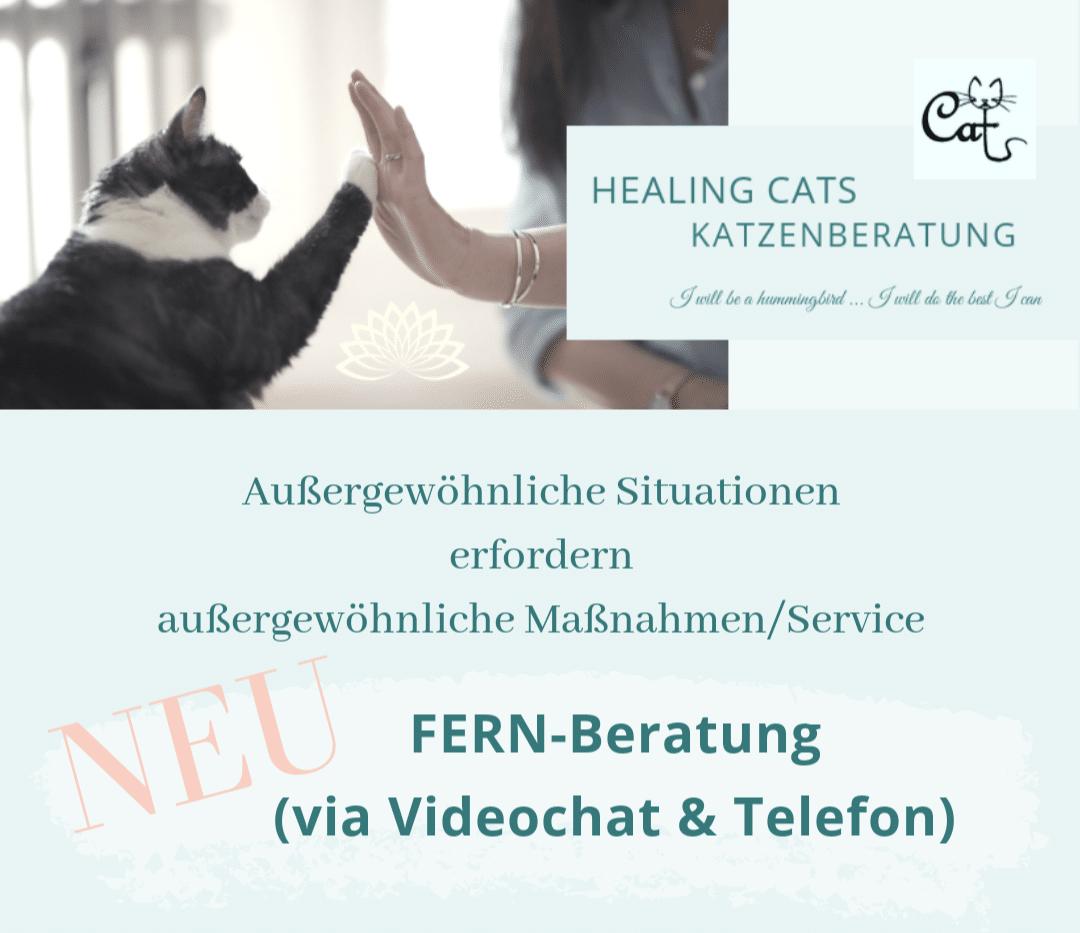 Katzenpsychologin Healing Cats Katzenberatung