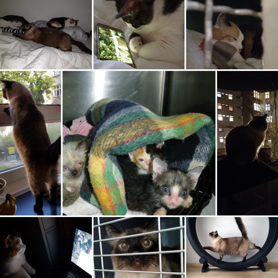 Katzenverhaltensberatung Berlin
