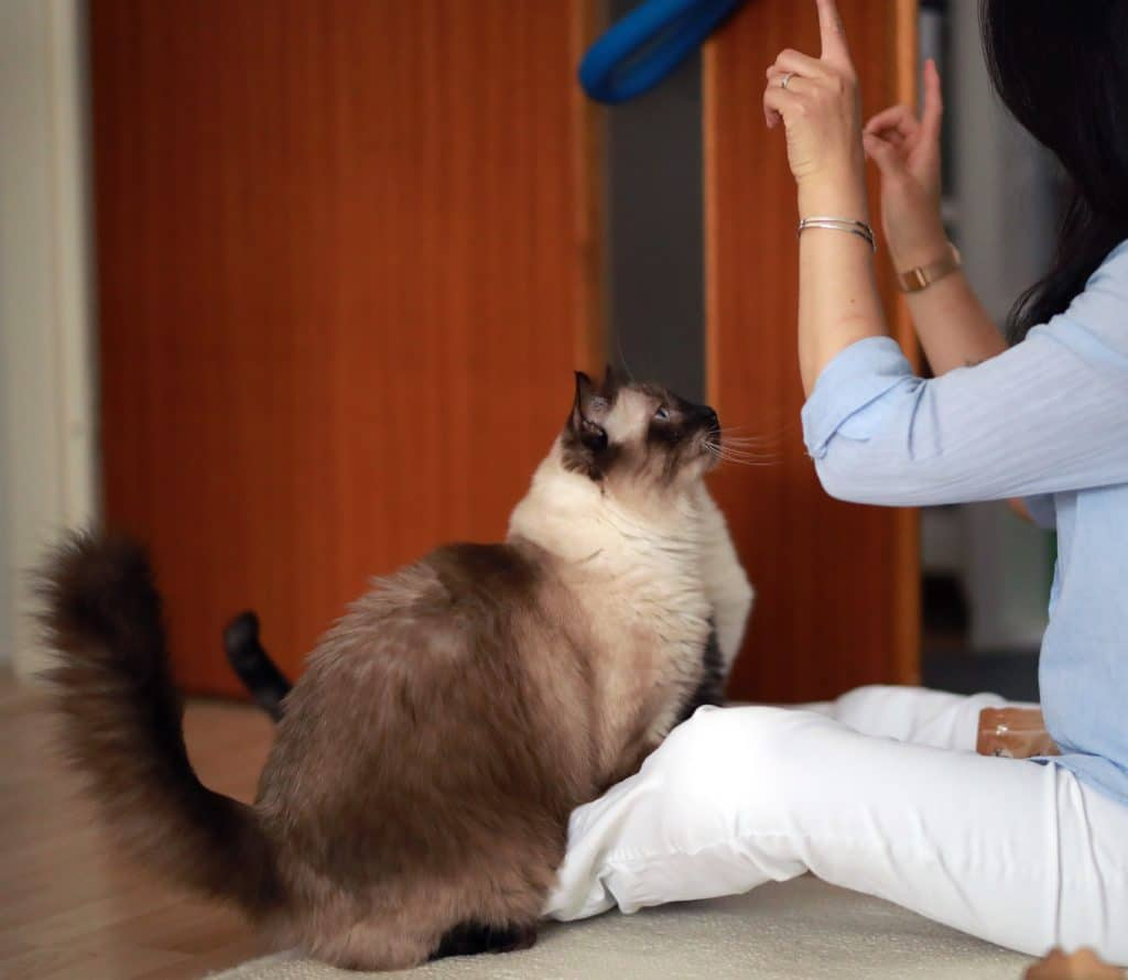 Katzenverhaltensberatung Clickern
